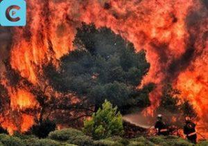 Kebakaran Hutan 2