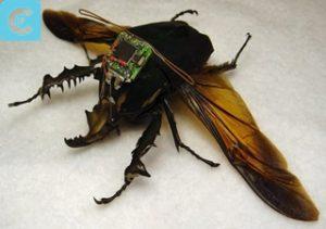 Hybrid Insect MEMS (HI-MEMS)