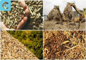 biomassa 2