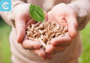 biomassa 3