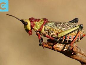 insekta